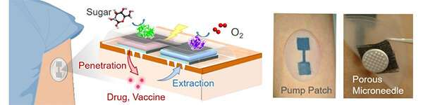 Biobattery-powered microneedle patch can deliver drugs and procure testing samples